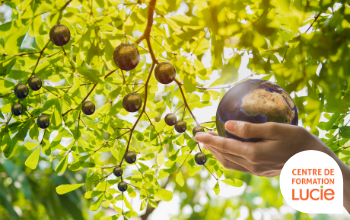 Arbre fruitier de petites terres, dont une cueillit par une main