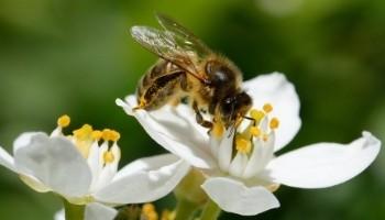 référentiel partie connaissance et vision sur la biodivsersité  - Agence LUCIE