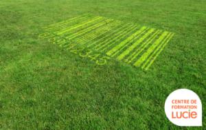 code barre dans un pelouse - Agence LUCIE