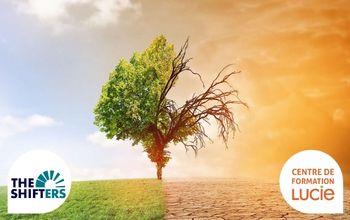 Vignette arbre vivant et mort - réchauffement climat - Agence LUCIE